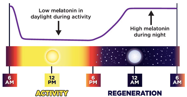 Melatonin Chart