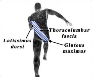 Posterior Diagram